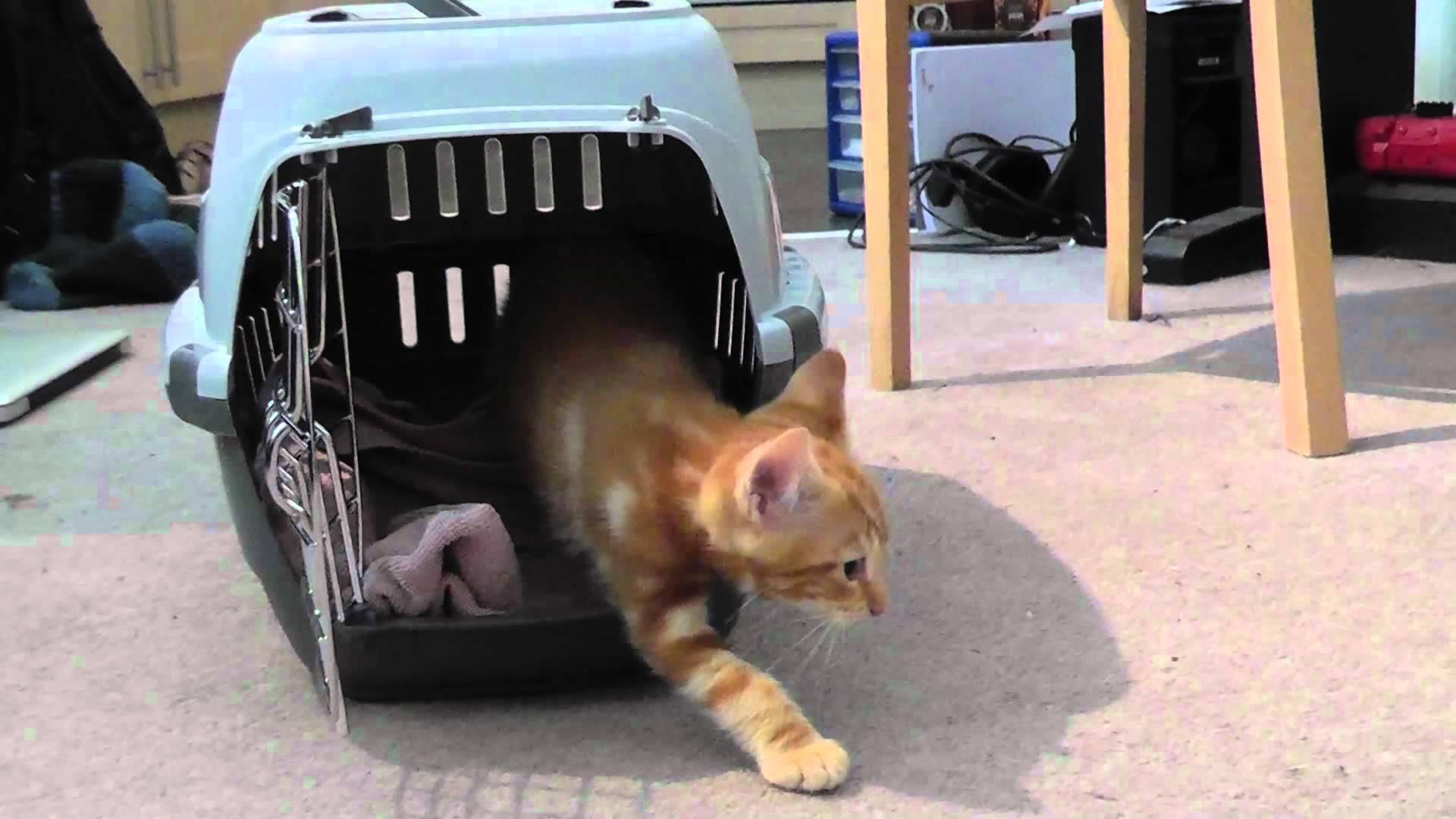 Первый день котенка в доме