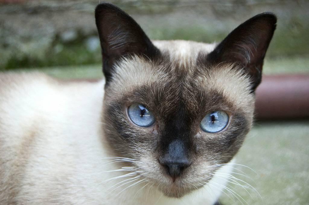 Сколько лет живут кошки и и от чего это зависит?