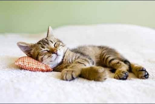 Сонник окружение кошек и котов. к чему снится окружение кошек и котов видеть во сне - сонник дома солнца