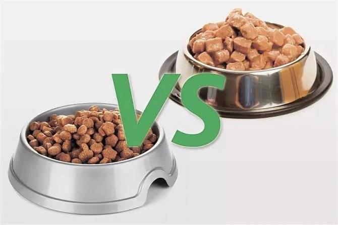 Можно ли чередовать сухой корм и натуральный в кормлении питомца?