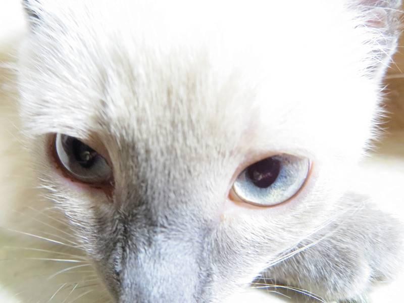 Что может означать появление коричневых выделений из глаз у кошек