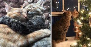 Скучают ли кошки по хозяевам и как проявляется любовь питомцев?