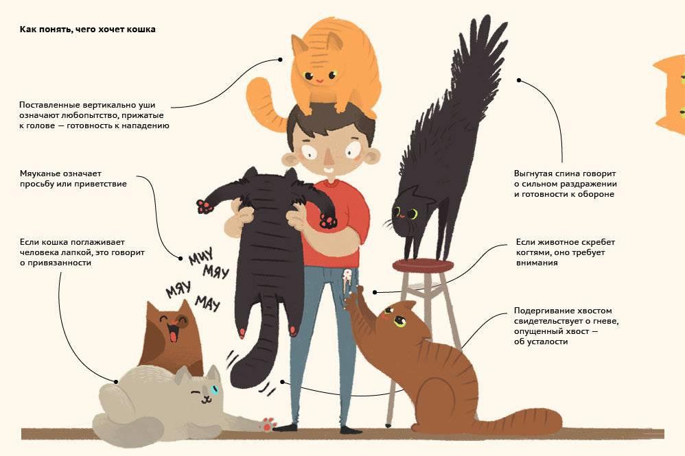 Язык кошек. кошачий язык - переводчик. мяуканье кошки - как понять?