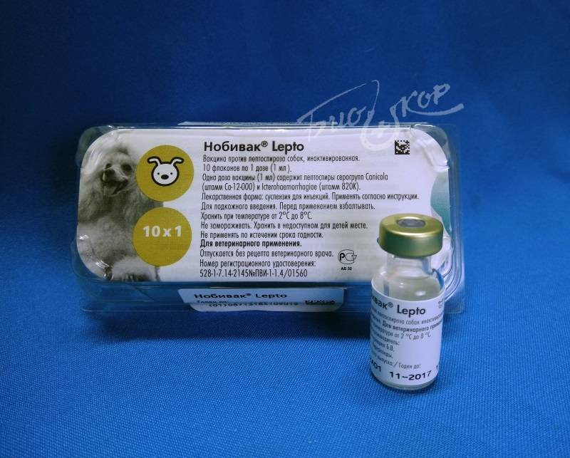 Лептоспироз у собак. описание, особенности, симптомы и лечение лептоспироза | животный мир