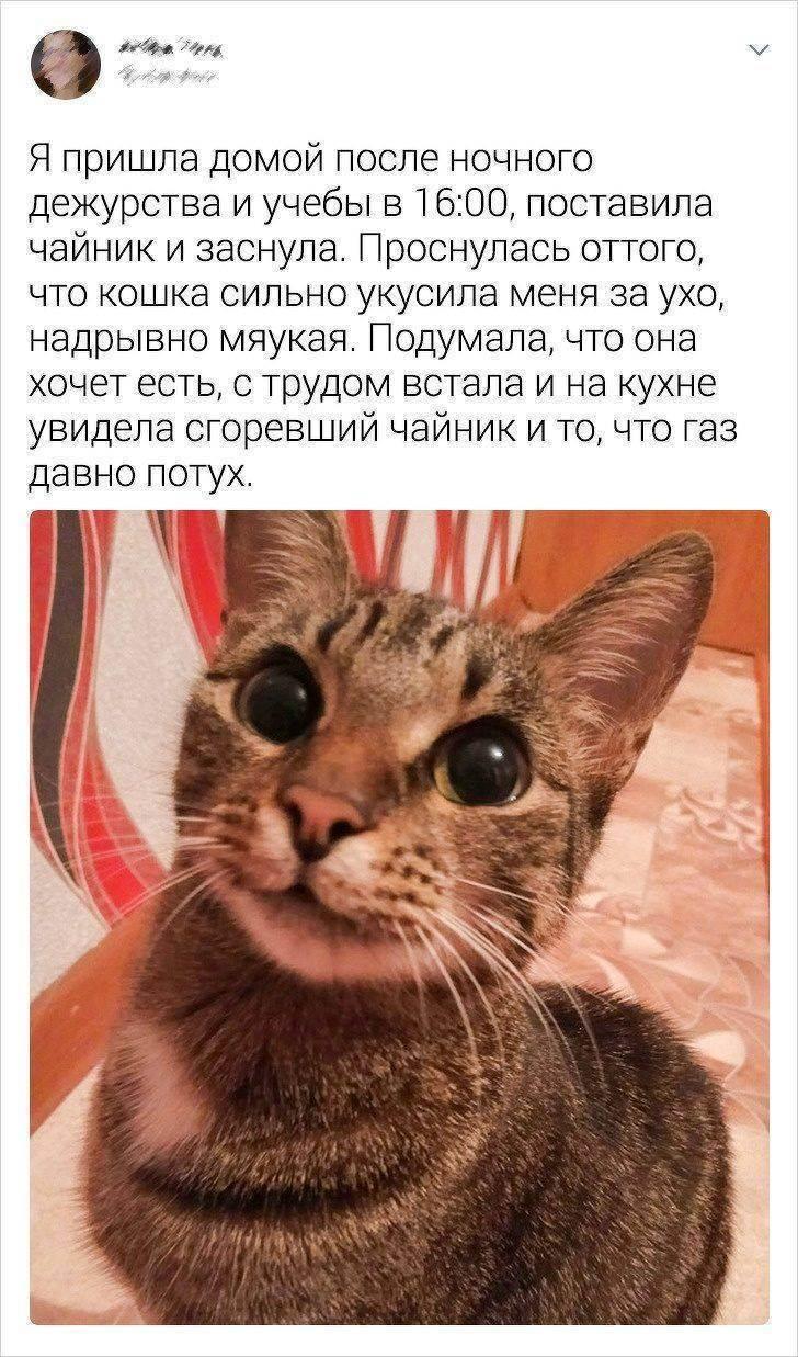 Топ-10 самых умных пород кошек: названия, фото и описание