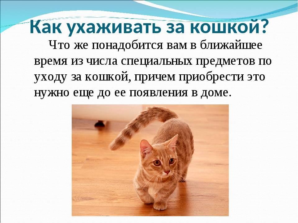 Как ухаживать за маленьким котенком (новорожденным, в 1 и 2 месяца) в квартире, что нужно для ухода в домашних условиях, фото