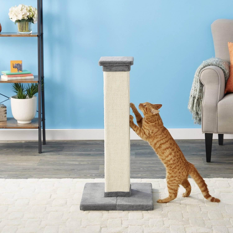 Когтеточка для кошек. как выбрать, где ставить?