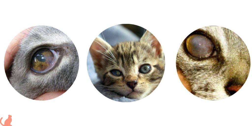 У кота не открывается глаз и слезится – в чем причина и что делать?
