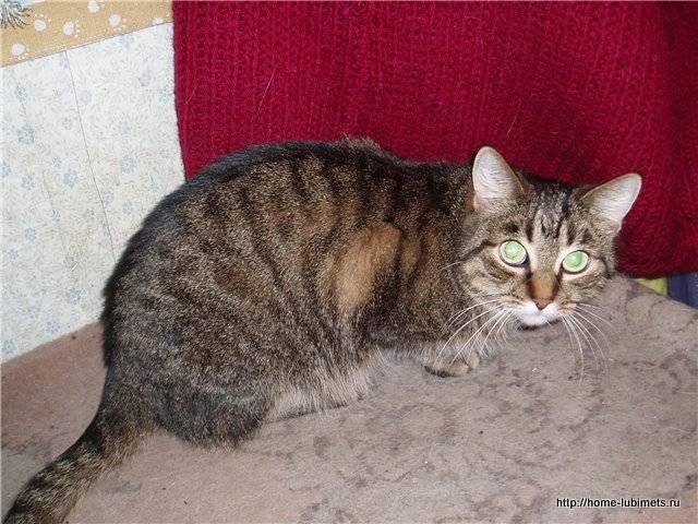 Кастрированный кот метит территорию — что делать?
