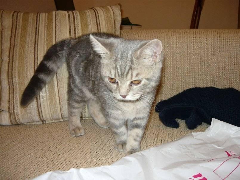 Рахит у котят и кошек: признаки заболевания