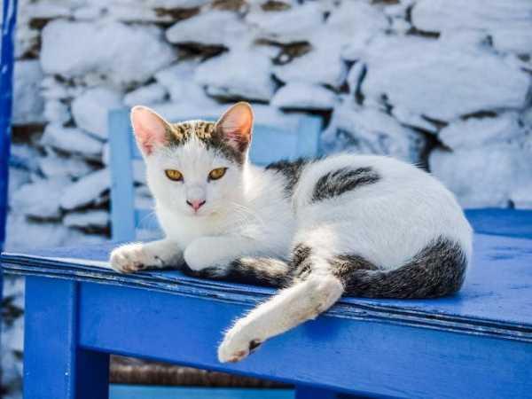 Почему шерсть на хвосте и спине у кота стала жирной и висит сосульками, появились коричневые пятна – что делать?