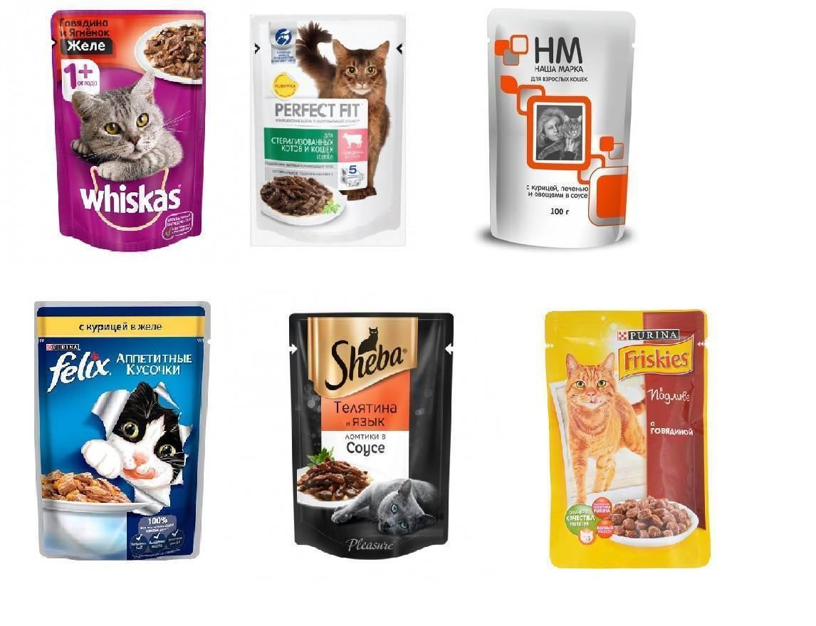 Влажный корм для кошек: рейтинг лучших от премиум до холистик-класса