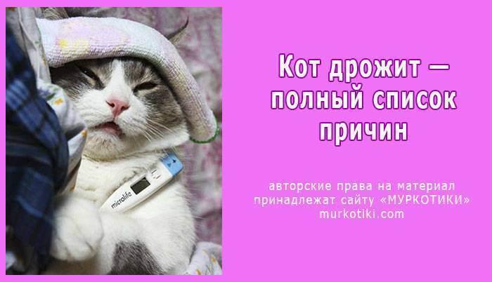 Лечим понос у кошки в домашних условиях: как и чем лечить правильно