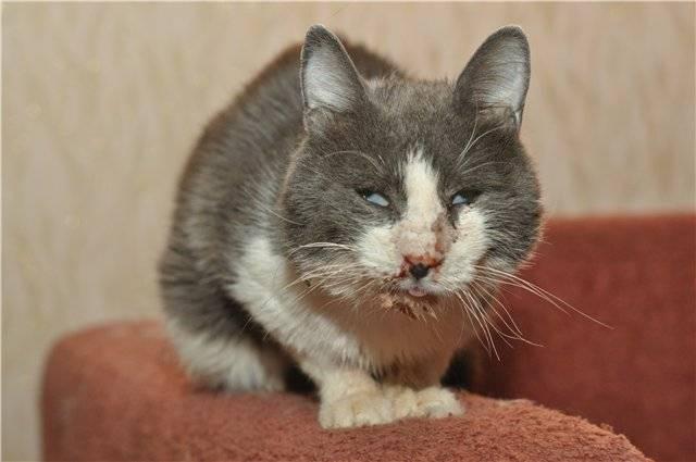 Ветеринары делятся опытом: почему кошка чихает, как лечить и что делать в этой ситуации