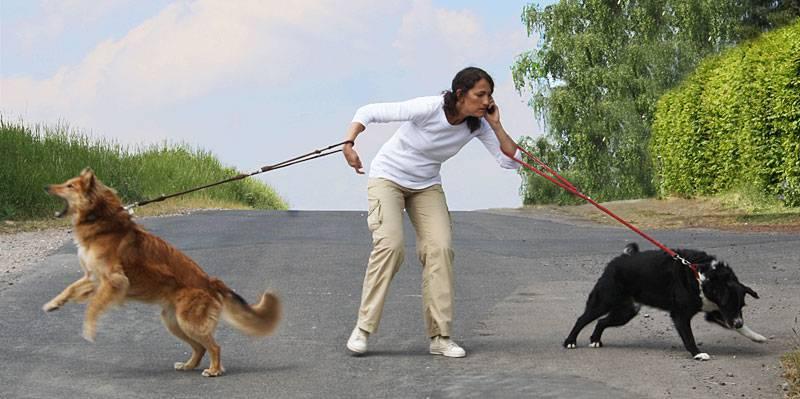 В каких месяцах гуляют кошки. сколько дней гуляет кошка: факты и способы решения проблемы