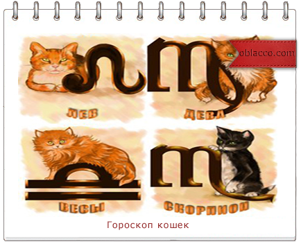 Кошачий гороскоп: раскройте характер мурок и барсиков по знаку зодиака
