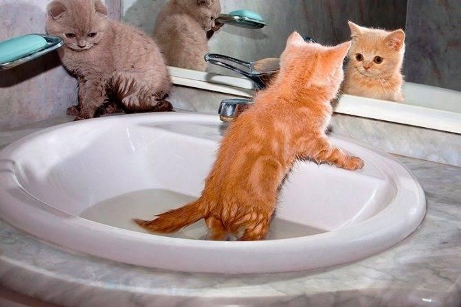 Как купать котенка: с какой частотой и с какого возраста