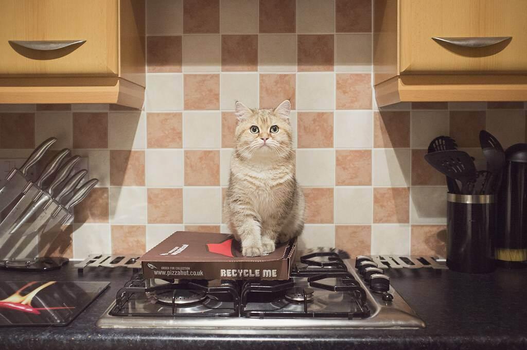 Можно ли давать молоко стерилизованным кошкам. можно ли кошкам давать молоко