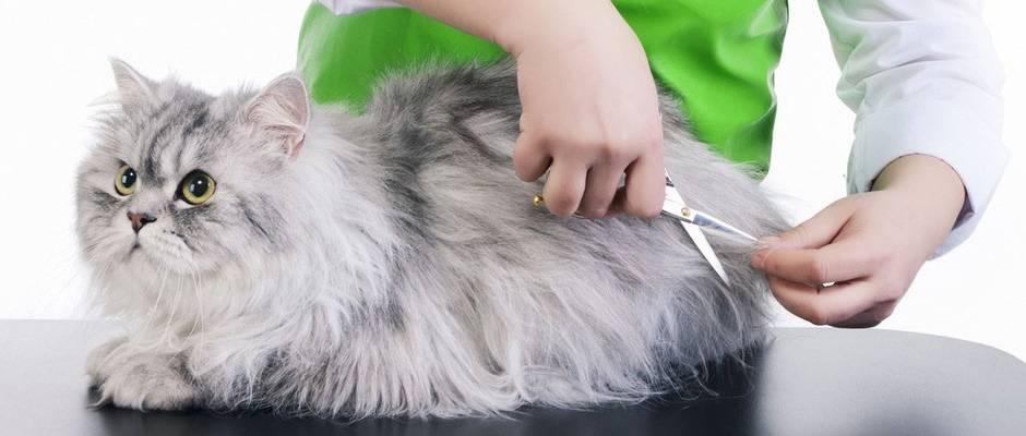 Груминг кошек: стрижка питомца в домашних условиях