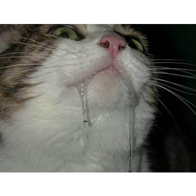 Пена изо рта у кошек: примеры что можно сделать в домашних условиях