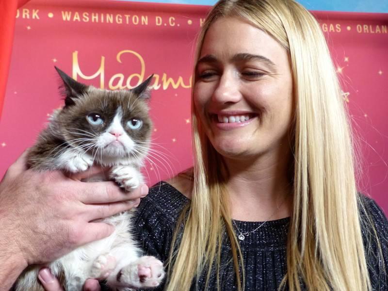 «звездные» кошки: каких кошек любят знаменитости