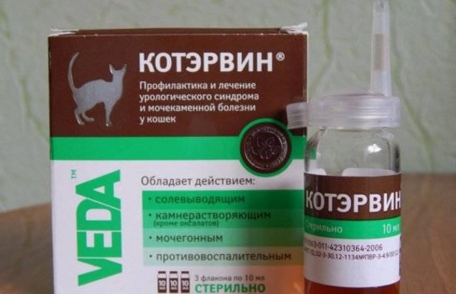 Цистон для кошек, инструкция по применению: дозировка для котят и взрослых котов, схема лечения