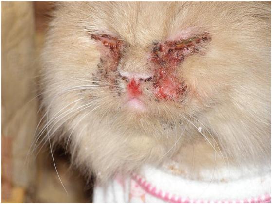 Смертельные болезни кошек: симптомы заболеваний