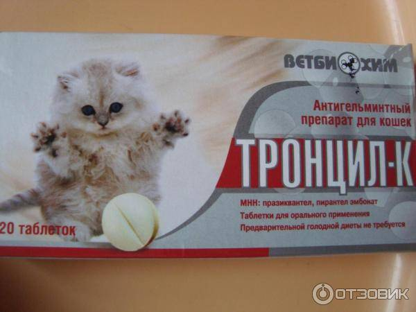 Котенок очень активный и игривый - что делать, если он гиперактивный? - petstime.ru