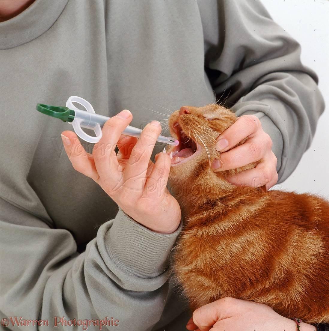 Как давать кошке таблетку или лекарства из шприца, что делать, если она упирается и выплевывает средство?
