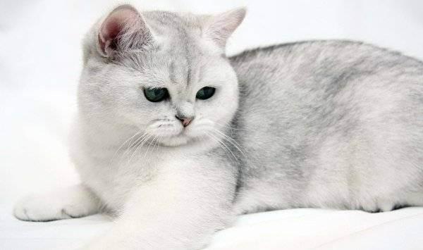 Как создать питомник кошек