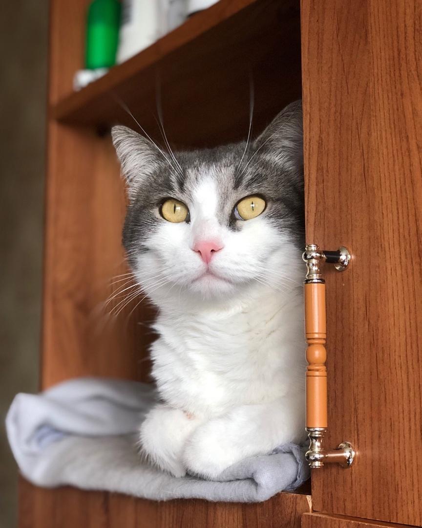 Чем и как можно кормить стерилизованную кошку, до и после операции