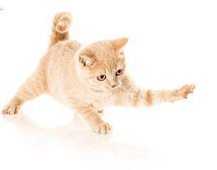 Уход за новорожденными котятами: что нужно знать владельцам